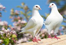 Für Tauben