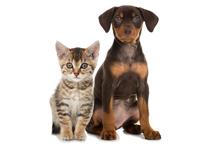 Für Hund & Katze