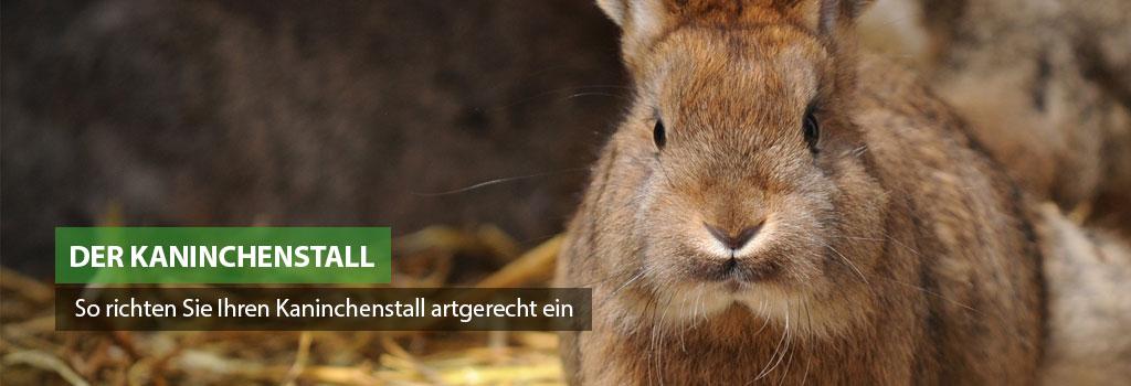 So richten Sie Ihren Kaninchenstall artgerecht ein