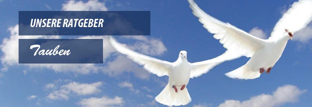 Der ultimative Ratgeber zum Thema Tauben